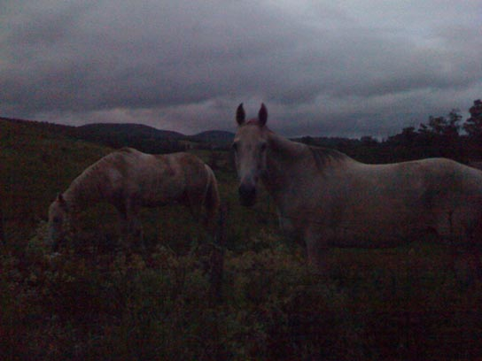 Whisper and Bella in the twilight of the field...